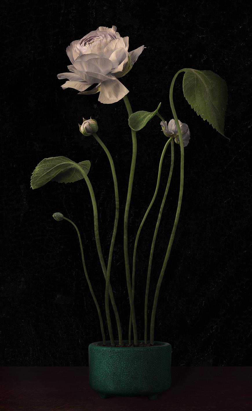 Bas Meeuws - Flower Pieces  Solo & boekpresentatie