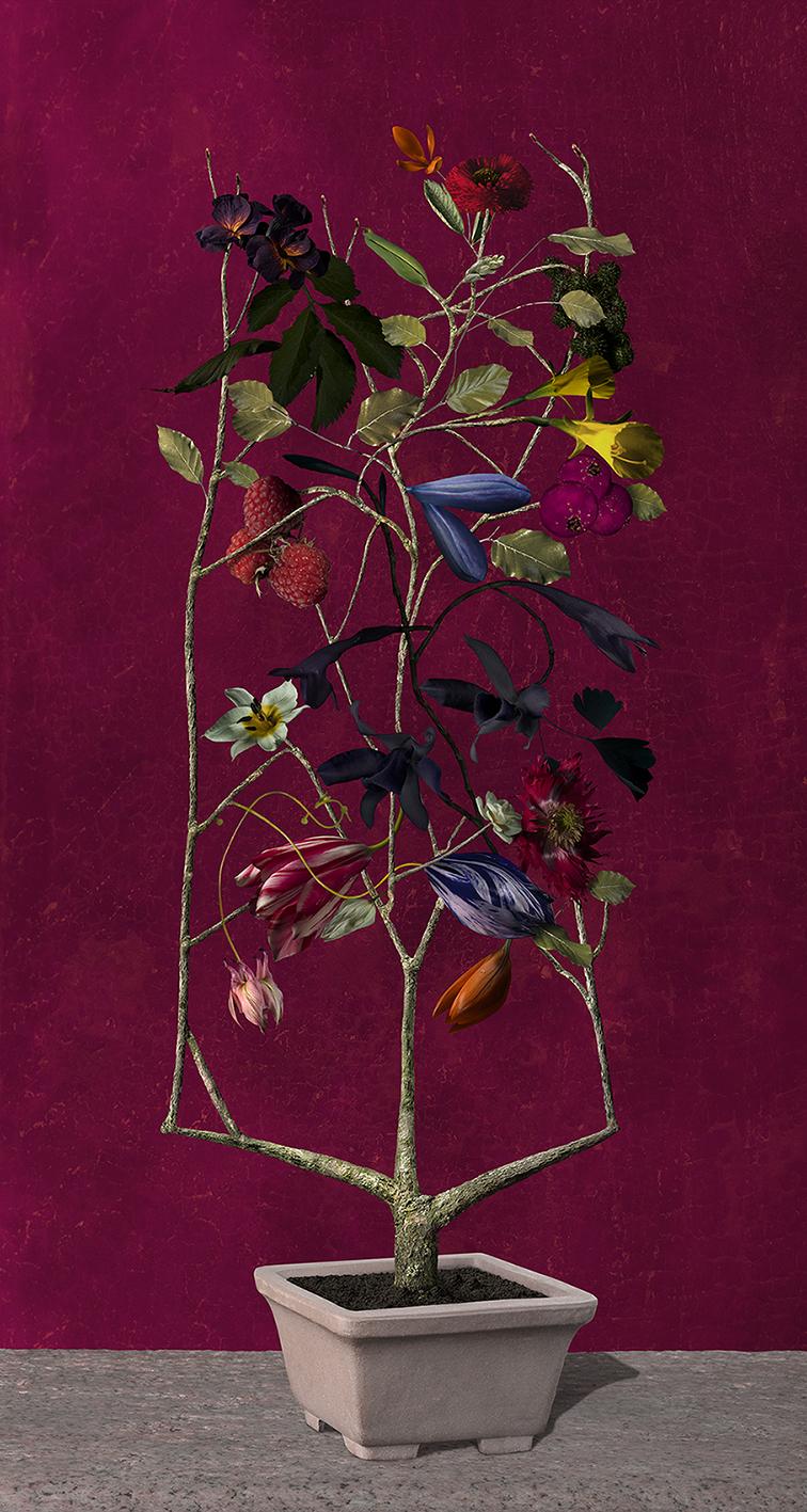Bas Meeuws - Flower Pieces  Solo